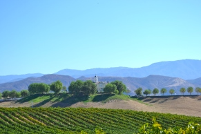 The rolling hills of the Temecula valley and the vines of Leoness