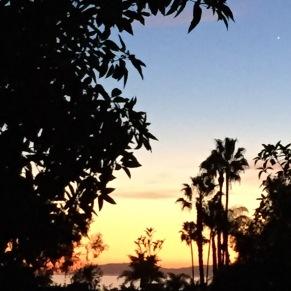 Catalina through the trees