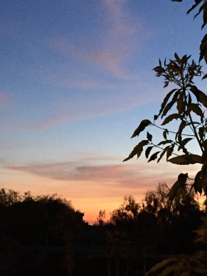 Newport Sky Sunset