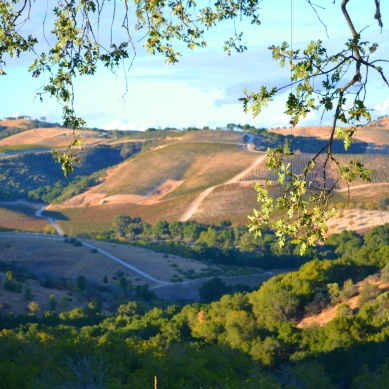 Paso Robles from the Fire Road