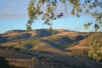 Paso Robles Hills from Jeep Tour