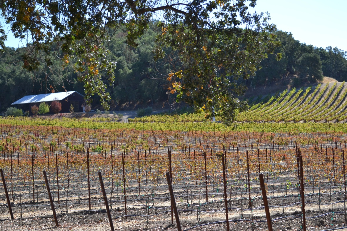 Fall Colors on the Vines 4