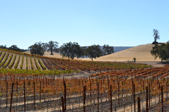 Fall Colors on the Vines 3