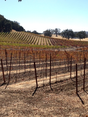 Fall Colors on the Vines 2