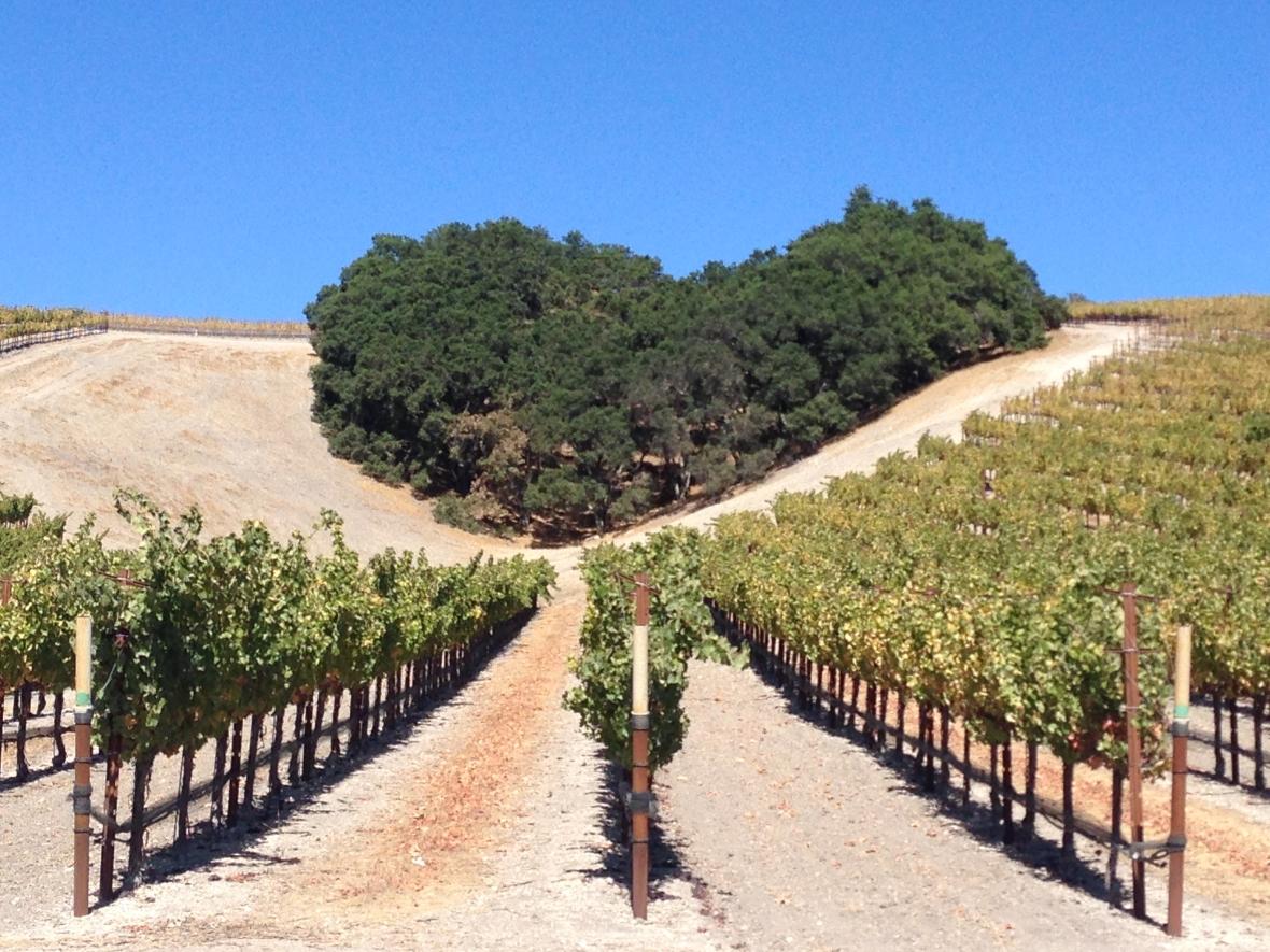Niner Wine Estates Heart Hill