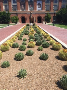 Cactus Garden at the Arizona State Museum